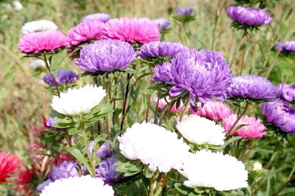 Фото - 15 квіткових культур, які потрібно посіяти на розсаду в квітні