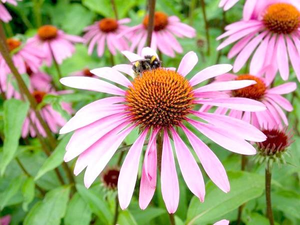 Фото - 15 квіткових культур, які потрібно посіяти на розсаду в березні