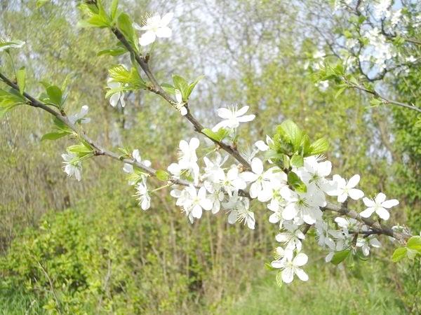 весна на дачі