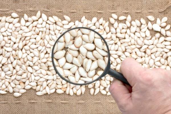 Фото - 7 важливих правил вибору насіння