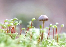 Чудесні гриби