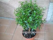 Фото - Декоратівнолістниє і красивоцветущие рослини