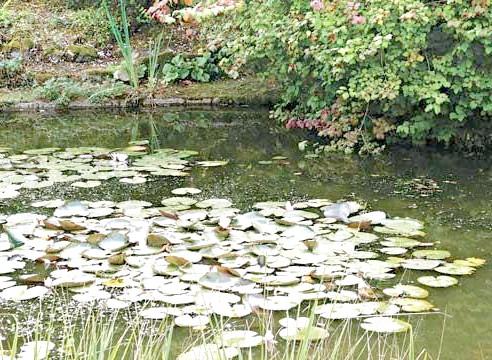 Садовий водойму пейзажного (ландшафтного) стилю
