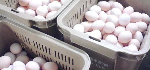 На фотографії результат хорошої несучості, shizuokagourmet.files.wordpress.com