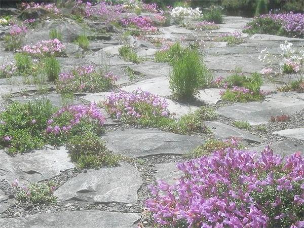 рослини в гравійному саду