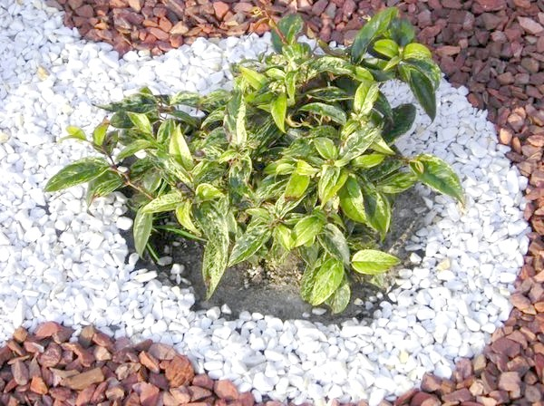посадка рослин в гравійному саду