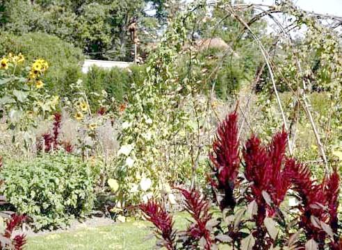 Овочеві та декоративні рослини в саду