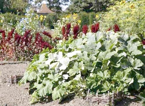 Гарбузова культура на тлі декоративних рослин