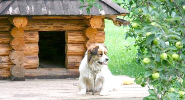Фото - Цікаві ідеї собачих будок