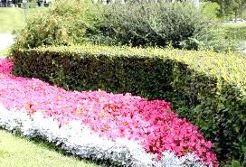 Фото - З чого зробити живопліт, колючий паркан або квітучу