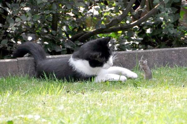 Не всякий кіт знає, що мишей потрібно ловити