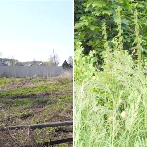 До (трава по пояс) і після (грабельками попрацювали вже) Дерево залишилося зліва.
