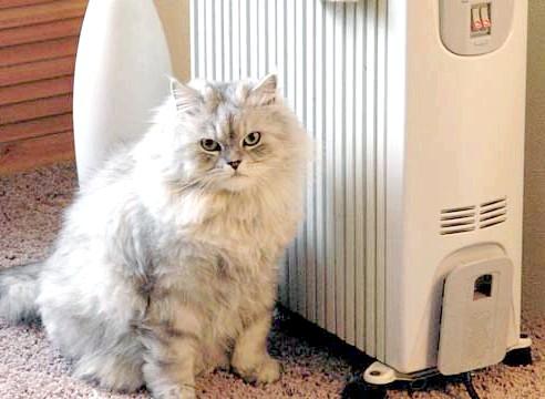 Кот в радіатора