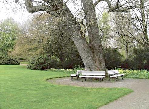 Дерево, оточене лавками