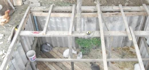 На фото кролики в ямі, atmagro.ru