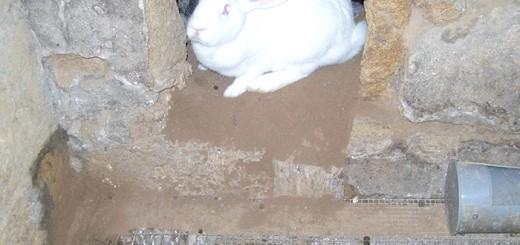 Фотографія кролика в норі, fermer.ru