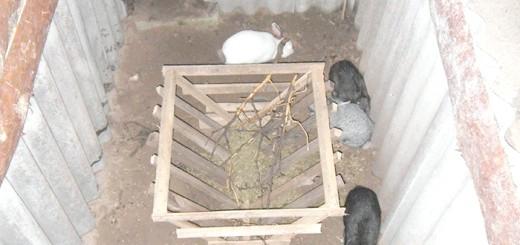 Зміст кроликів в ямі, ya-fermer.ru