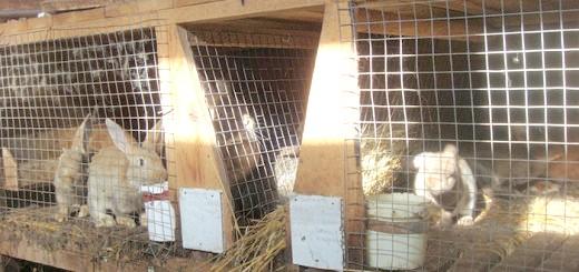На фото зміст кроликів в клітинах, krolikoved.ru
