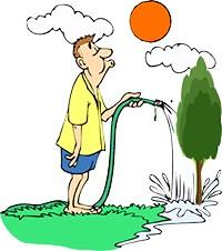 Фото - Як правильно поливати дерева-помилки початківців