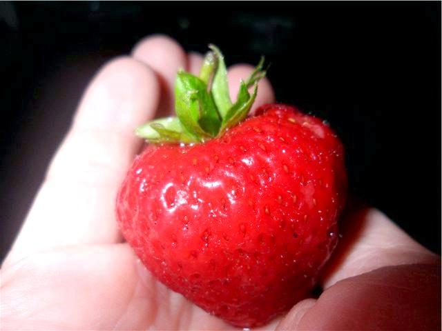 Фото - Як правильно вирощувати полуницю. отримувати велику ягоду