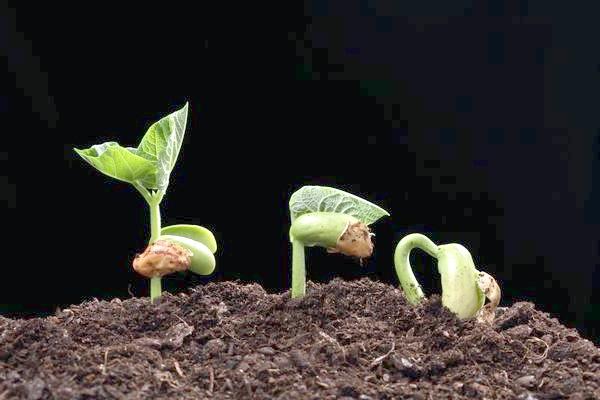 Фото - Як перевірити насіння на схожість