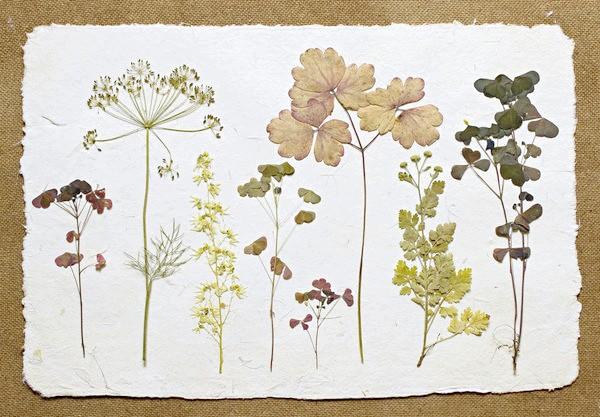 Композиція в стилі старовинного гербарію