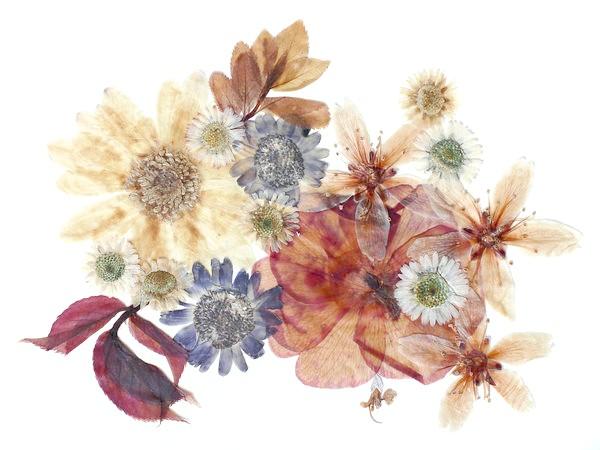 Ошибана - вид мистецтва, в якому замість кистей і фарб використовуються засушені рослини