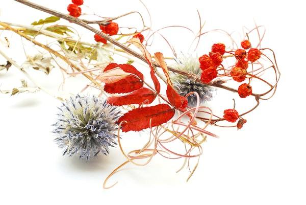 Деякі рослини, висихаючи, відмінно зберігають природну форму і навіть колір