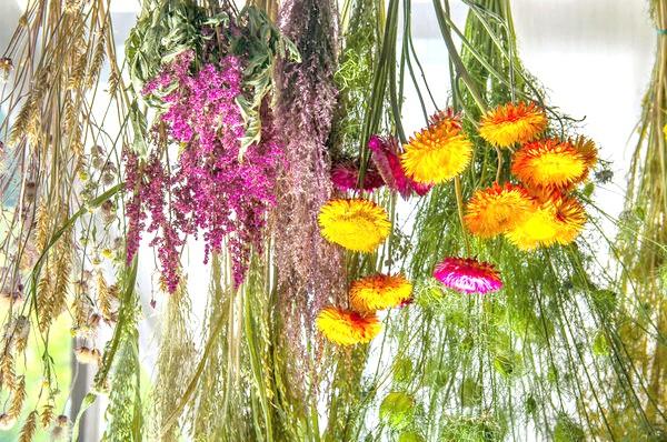 Потрібно подбати про те, щоб рослини не втратили при сушінні ні форму, ні колір