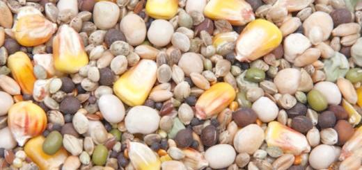 Зображення зернових кормів, all.biz