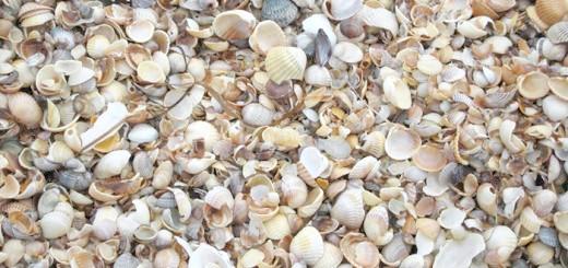 Фото морських черепашок, hiblogger.net