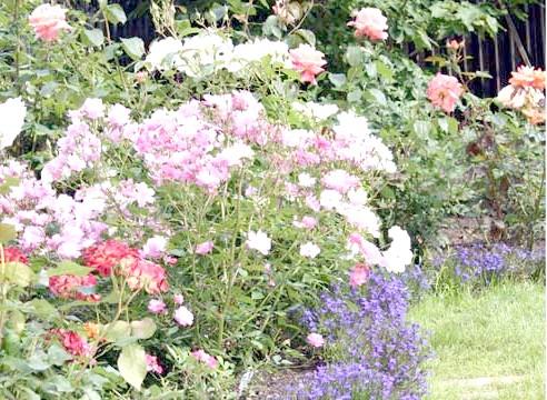 Роза в квіткової компазиция