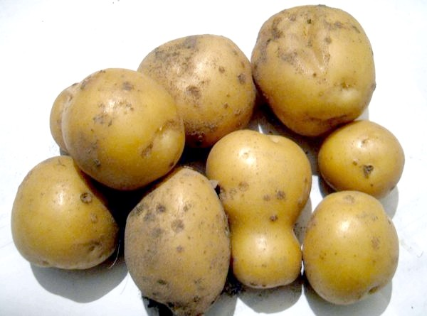 Щоб урожай радував, картоплі потрібна волога