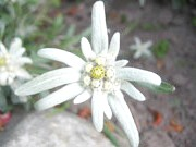 Фото - Самотній квітка