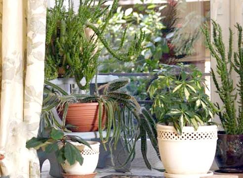 Кімнатні рослини різних видів