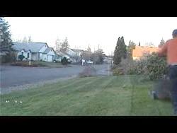 Фото - Від першої стрижки газону до останньої - як часто і як правильно косити газон