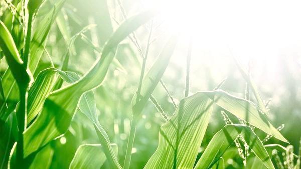 Органічне землеробство багато методи запозичує у природи