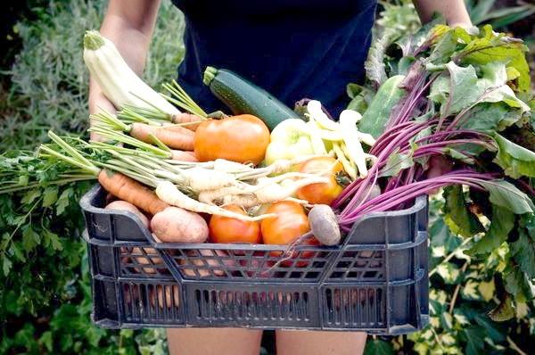 Мета органічного землеробства - отримати екологічно чистий урожай