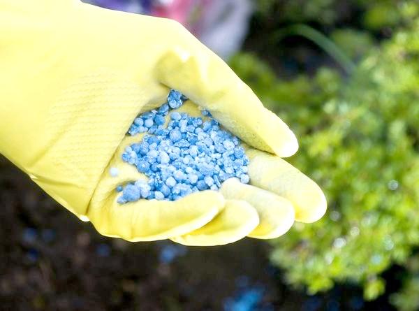 Методика Міттлайдера вітає використання мінеральних добрив