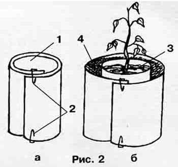 Підготувати насіння до посіву, проростити, розмістити, овочева розсада умови росту і розвитку, дорощування