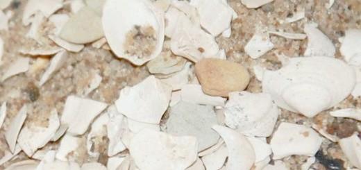 Кормові черепашки для гусенят, rakushka.su