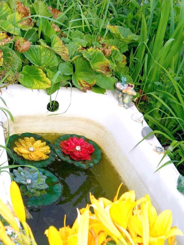 болото для жаб