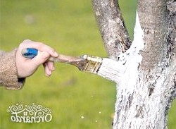 Розширюємо яблуневий сад - все про осінній посадці яблунь