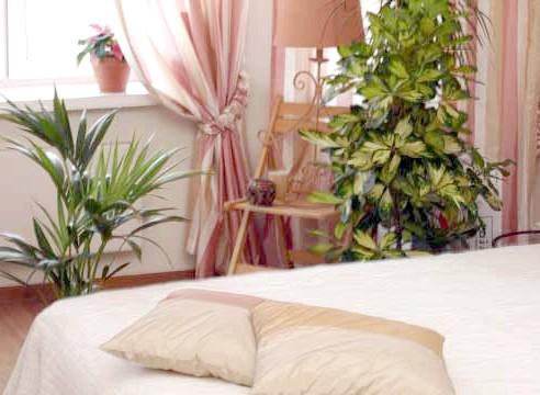 Рослини в спальні