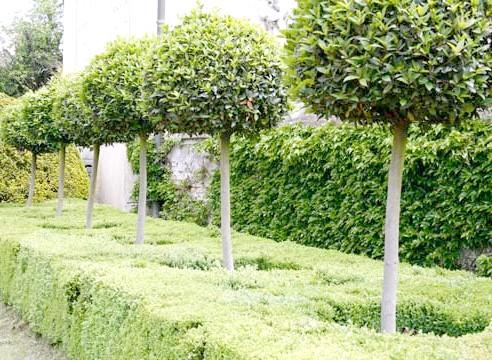 Дерева, штамбова форма