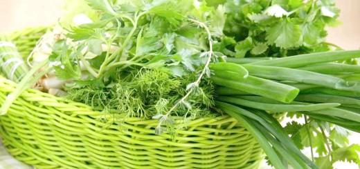 Зелень для гусенят