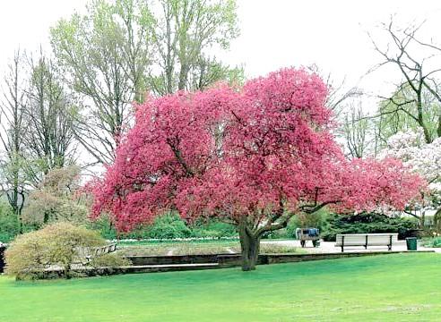 Солітер, окреме дерево