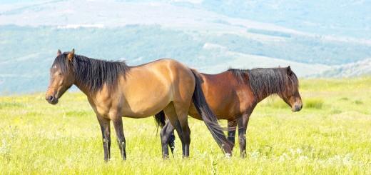Фото два коні в горах, picrolls.com