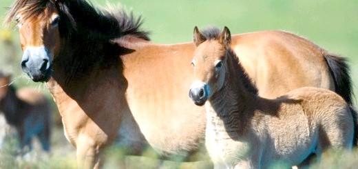 На фото коня з лошам, megalife.com.ua