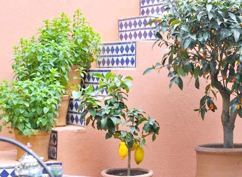 Тропічні рослини